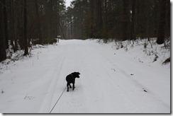 Snow Jan 2010 019