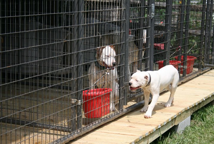 Backyard dog kennels runs 2017 2018 best cars reviews