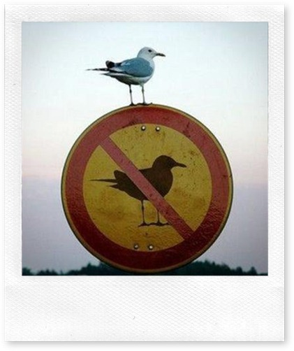prohibido pajaros