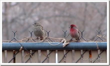 Bird Festival 003