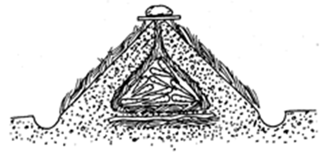 A storage mound in a garden provides safe keeping for your vegetables. A ground-level screen discourages burrowing animals; layers of straw and dirt topped by a board shelter the vegetables inside the cone-shaped mound