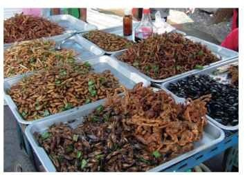 Thai market selling deep-fried insects (anticlockwise left, front): locusts, bamboo-worms, moth chrysalis, crickets, scorpions, and diving beetles.