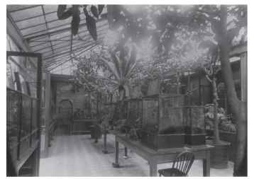 The London Zoo opened the first major insect exhibit in the world in 1881.