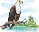 Predatory perch