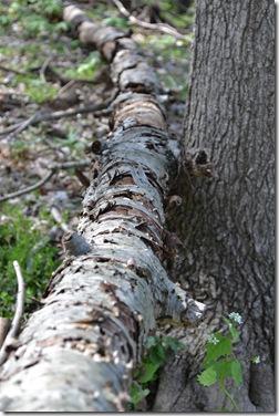 mushroom hunt 033