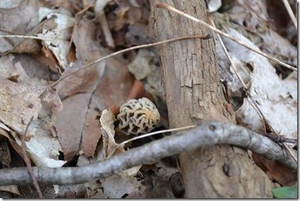 mushroom hunt 035