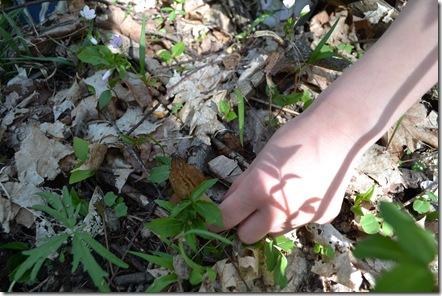 mushroom hunt 047