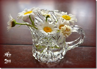 daisies in a creamer cup
