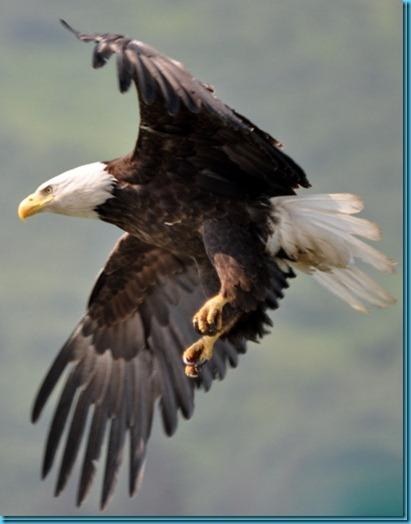 Spread Eagle Seward