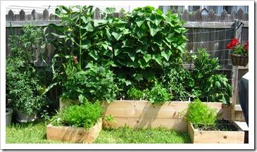 garden 059