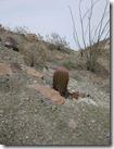 Arizona_2010 018