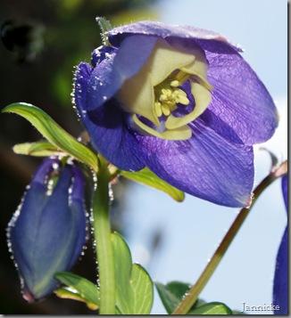 Stor blomst