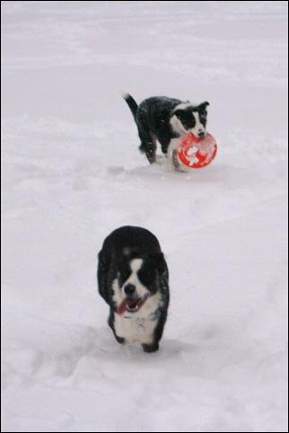 frisbee5