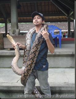 snake show 2