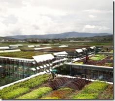 mcdon rooftop farming