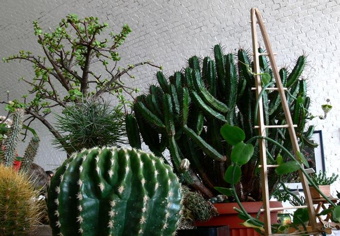 jardins suspendus cactus 007