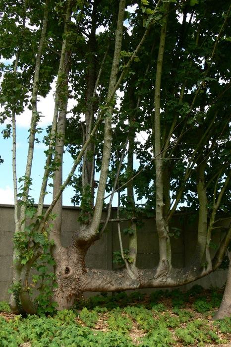 jardins suspendus 173