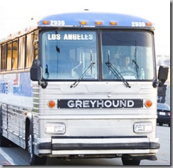 Greyhound