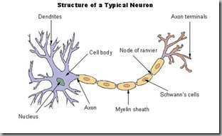 Living with kennedy 39 s disease new research paper on for Bulbar motor neuron disease