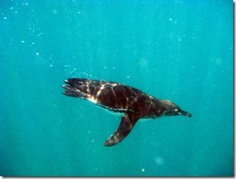 Isabela Snorkeling37 [800x600]