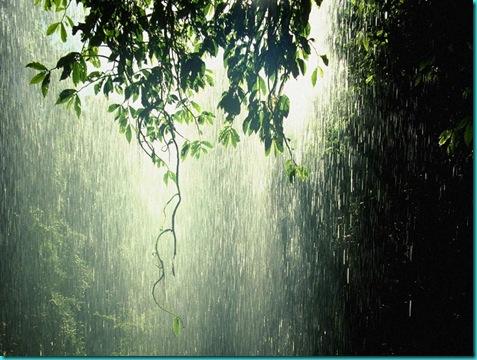 rain_forest_tropic