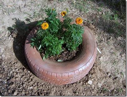 Garden 5-16 03