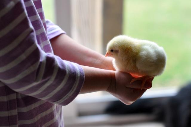 chicks kids march 2011 026