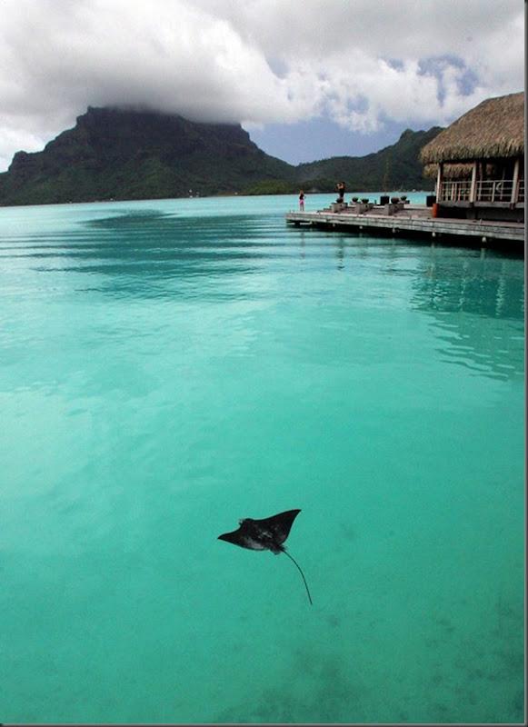 O Paraíso na Terra Bora Bora (9)