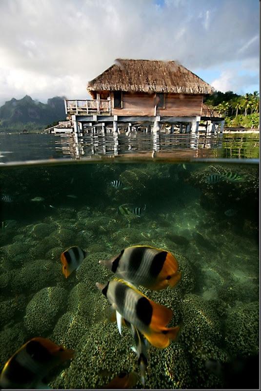 O Paraíso na Terra Bora Bora (3)