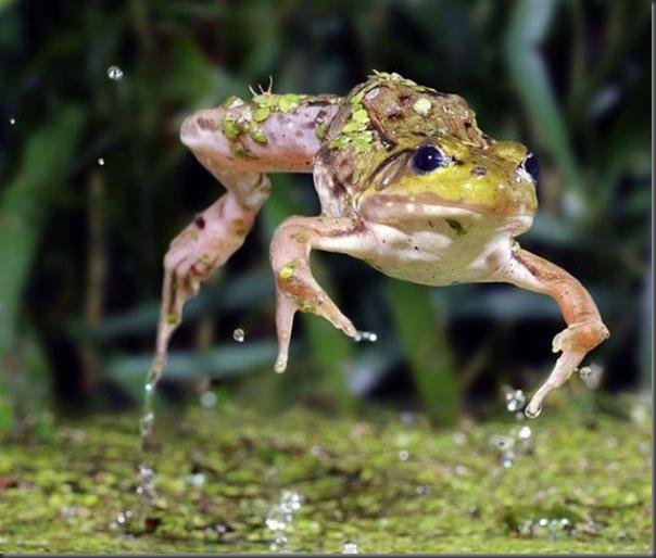 Belissimas fotos tiradas em alta velocidade (2)