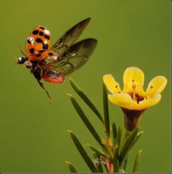 Belissimas fotos tiradas em alta velocidade (1)