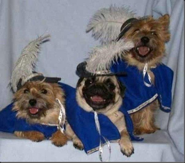 Cachorrinhos de roupinha (9)