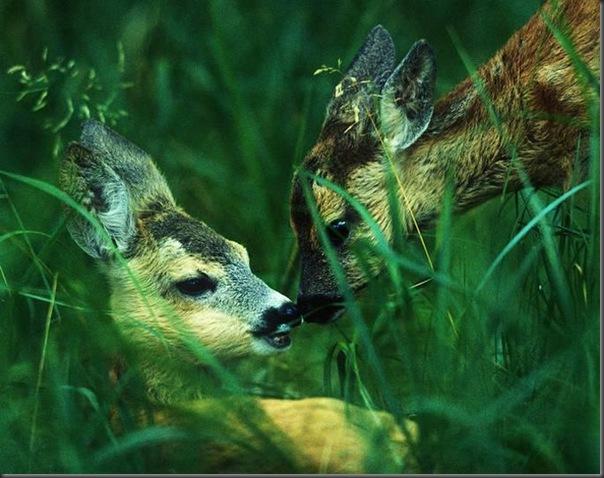 Lindas imagens de animais por Andris Eglitis (27)