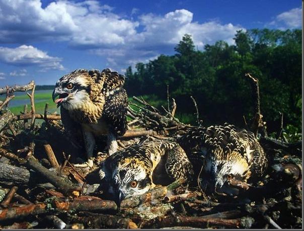 Lindas imagens de animais por Andris Eglitis (26)