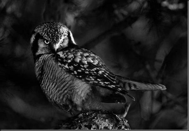 Lindas imagens de animais por Andris Eglitis (24)