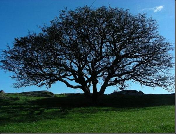 Lindas árvores (14)