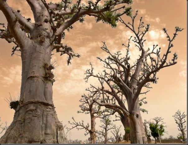 Lindas árvores (10)
