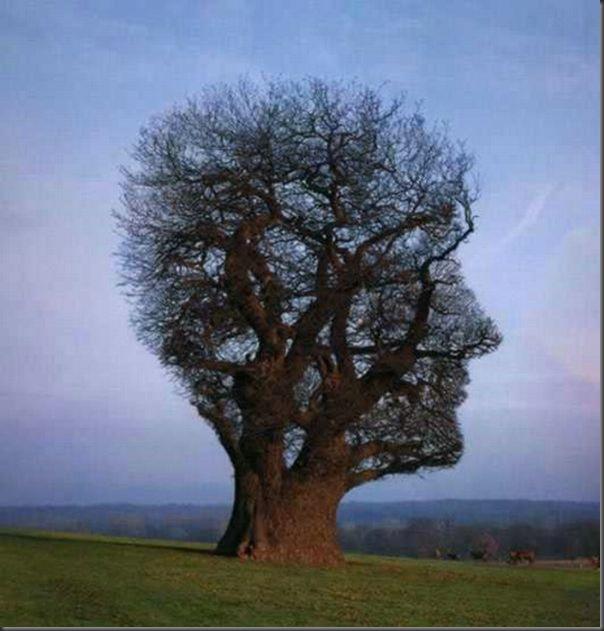 Lindas árvores (3)