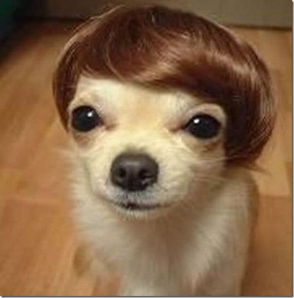 Belos e estranhos penteados caninos (15)
