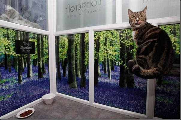 Hotel 5 estrala para gatos (6)