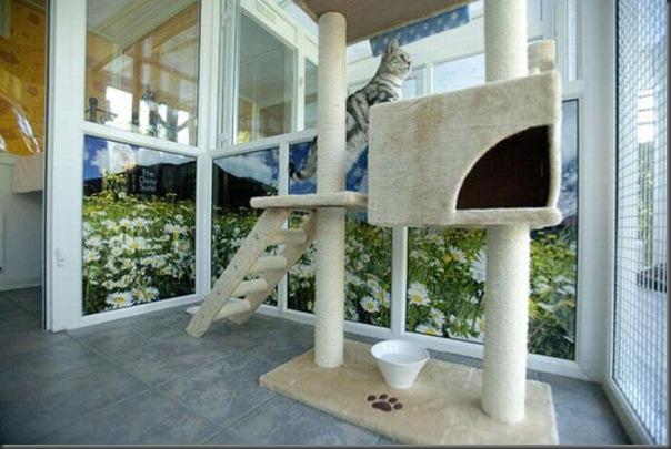 Hotel 5 estrala para gatos (5)