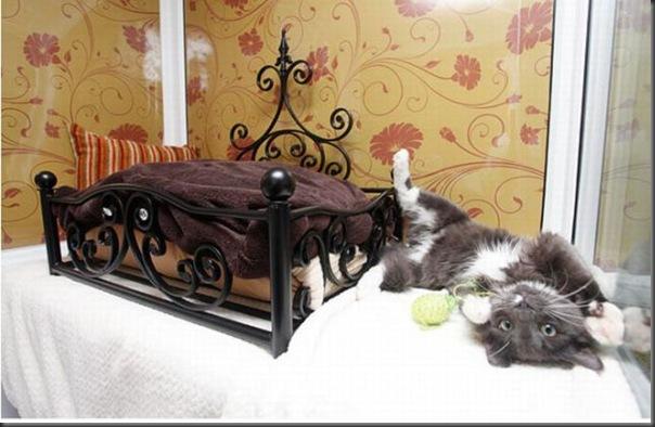 Hotel 5 estrala para gatos (1)