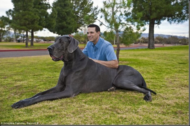 Jorge o maior cão do mundo (2)