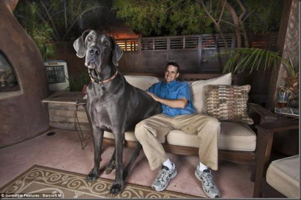Jorge o maior cão do mundo