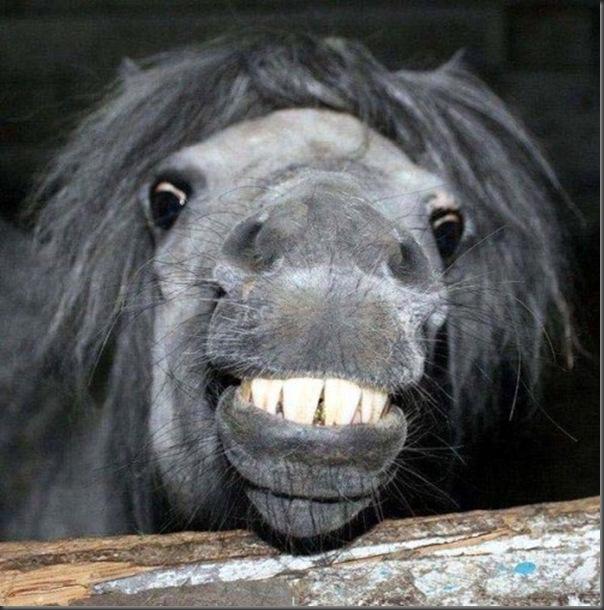 O sorriso dos animais (14)