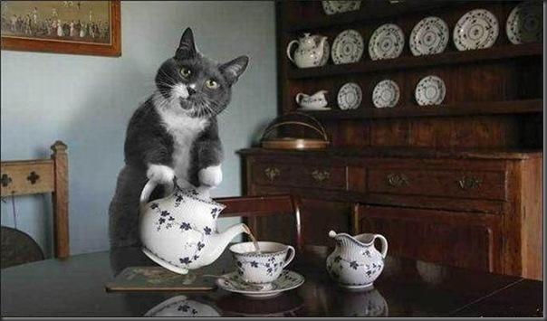Aceita uma xicara de cafe