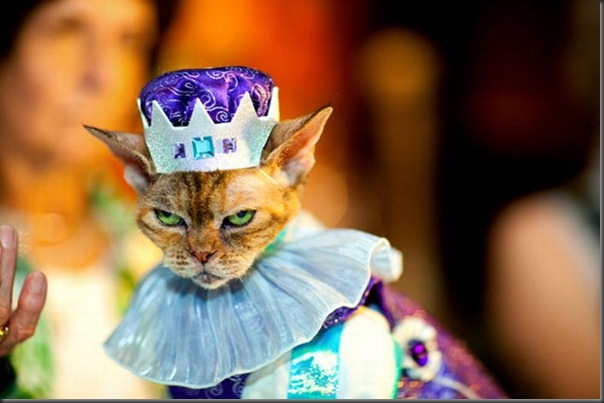 Desfile de moda de gatos (10)