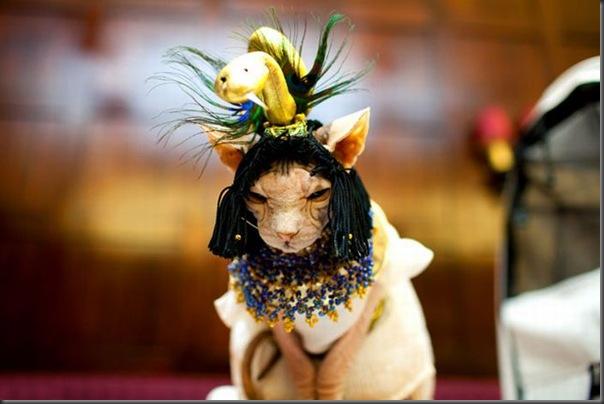 Desfile de moda de gatos