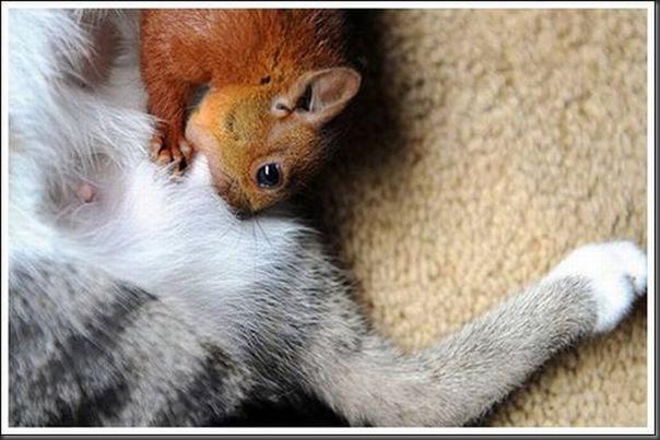 Gatos adoram um esquilo (8)