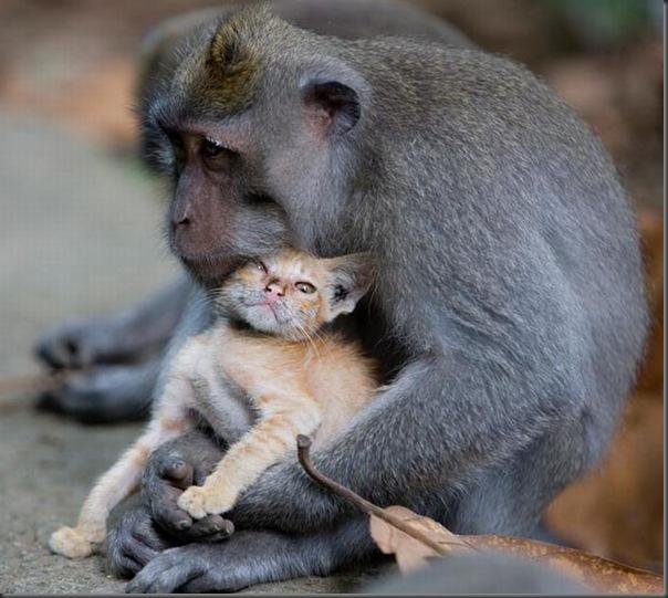 Macaco adota um gatinho (1)